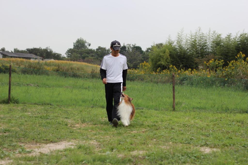 豊明市、犬のしつけ教室 | 犬のしつけ、問題行動でお悩みなら 愛知県ドッグスルーム