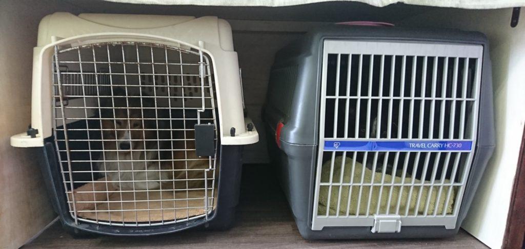 クレートトレーニングは愛知県東海市、ドッグスルームへご相談ください | 犬のしつけや問題行動でお悩みなら愛知県ドッグスルーム
