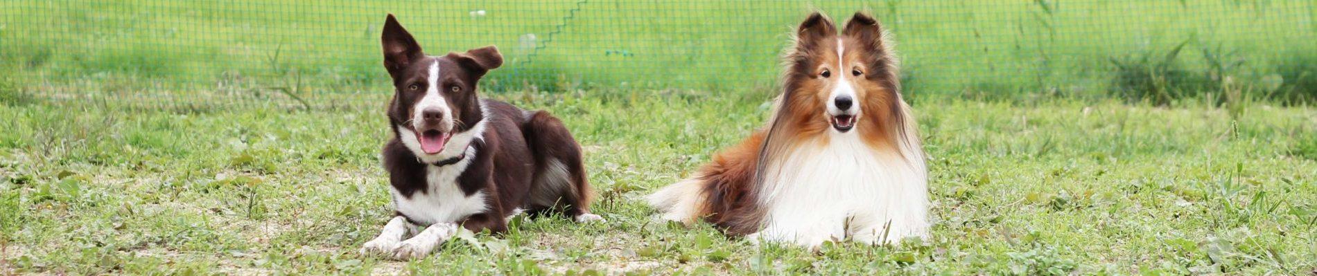 愛犬と一緒にトレーニングを始めてみませんか?