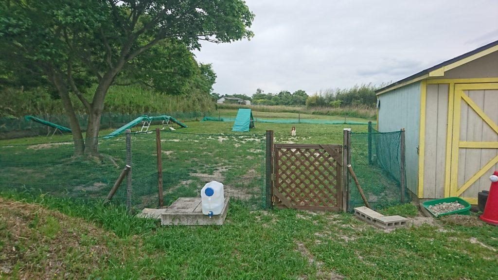 アジリティーフィールド | 犬のしつけ 問題行動の改善 愛知県 ドッグスルーム