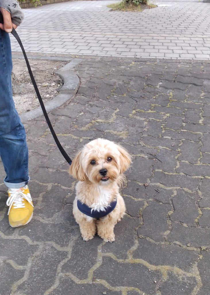東海市、出張トレーニング   犬のしつけや問題行動でお悩みなら愛知県ドッグスルーム