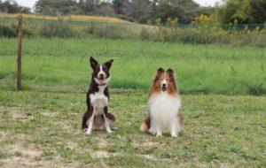 犬のしつけ、問題行動でお悩みならドッグスルームへご相談ください。
