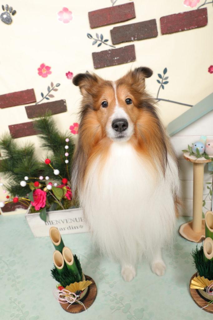 愛犬のご紹介 フォルテ