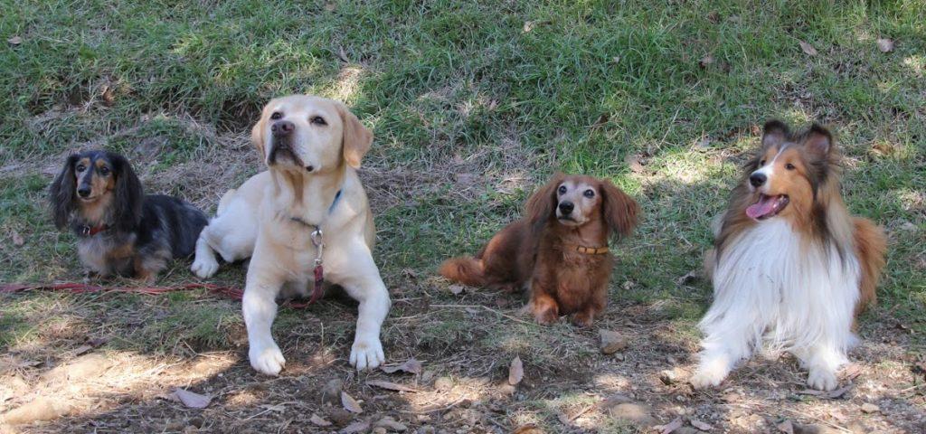 ドッグスルームへご来訪ありがとうございます   犬のしつけや問題行動でお悩みなら愛知県ドッグスルーム