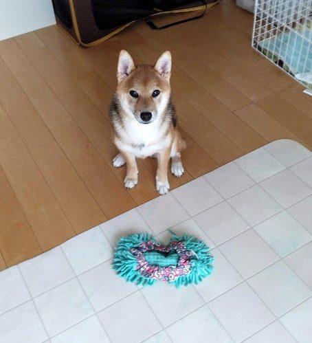 パピートレーニング終了、東海市 | 犬のしつけや問題行動でお悩みなら愛知県ドッグスルーム