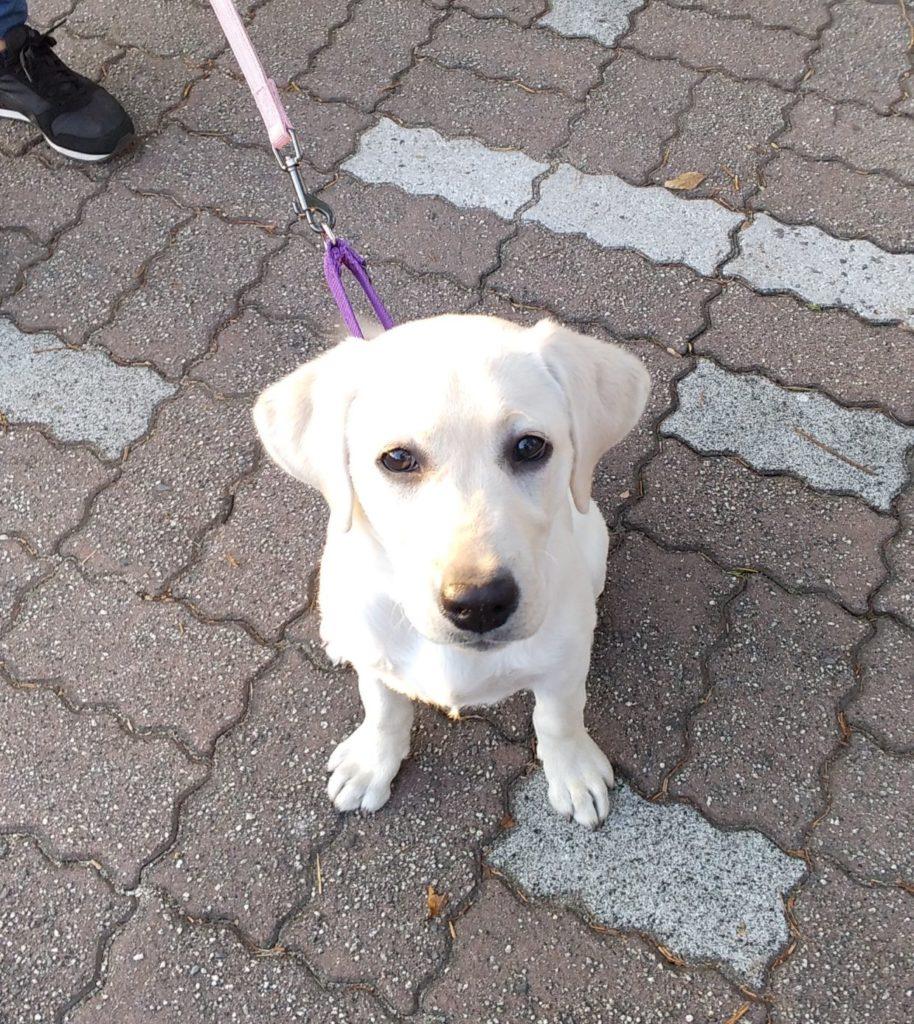 パピートレーニング、東海市 | 犬のしつけや問題行動でお悩みなら愛知県ドッグスルーム