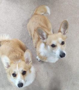 お客様の声 | 犬のしつけ 問題行動の改善 愛知県 ドッグスルーム